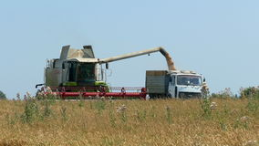 Unloading wheat harvester. In august stock footage