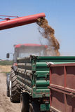 Unloading Wheat Into Trailer. Combine harvester unloads his load of wheat grains into tractor trailer Stock Images