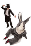Unlucky magic trick. Luckless magician conjuring with a inconceivable rabbit over white background Stock Image