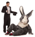 Unlucky magic trick. Luckless magician conjuring with a inconceivable rabbit over white background Stock Photography