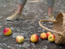 Unlucky woman with spilled apples Stock Photography