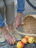 Unlucky woman with spilled apples. Organic apples spilled from the basket on the floor Stock Photo