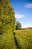 Unmade road in summer Stock Photography
