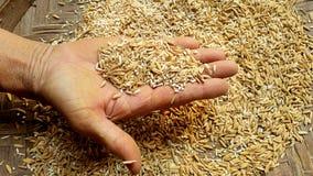 Unmilled rice Arkivbild