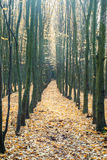 Unnatural straight line of trees Royalty Free Stock Photos