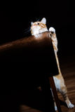 Unny ginger tabby cat looking up from the table Royalty Free Stock Images