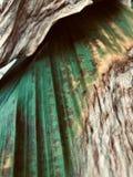 Uno asciutto lascia nell'autunno di colore verde e giallo immagini stock