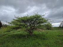 Uno che si è sviluppato sopra i campi di erba verde Fotografia Stock Libera da Diritti