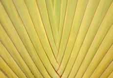 Uno del modelo en las hojas de palma Imágenes de archivo libres de regalías