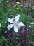 Uno di un Wildflower gentile Immagini Stock Libere da Diritti