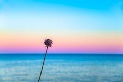 Uno florece delante de un cielo en colores pastel Foto de archivo
