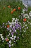 Uno mismo de la mezcla de la primavera sembrado Fotografía de archivo libre de regalías
