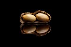Uno peló el cacahuete aislado en fondo negro Fotos de archivo