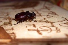 Uno scarabeo rinoceronte raro si siede sulla tavola contro lo sfondo di che cosa è scritto immagine stock