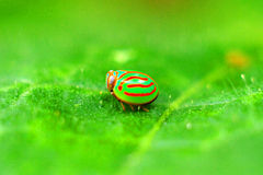 Uno scarabeo verde Fotografie Stock