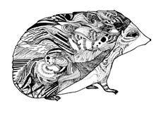 Uno schizzo dell'istrice Immagini Stock
