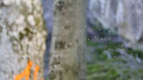 Uno sciame delle formiche di volo stock footage