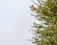 Uno sciame delle formiche nell'aria Stagione della riproduzione in formiche Formiche alate Fotografie Stock