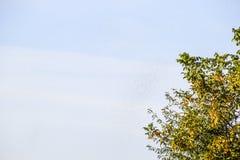 Uno sciame delle formiche nell'aria Stagione della riproduzione in formiche Formiche alate Fotografia Stock
