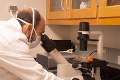 Uno scienziato che esamina un microscopio Immagine Stock