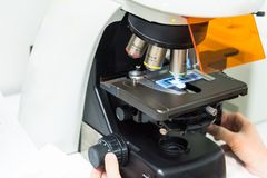 Uno scienziato che guarda morfologia delle cellule di coltura cellulare immagini stock libere da diritti