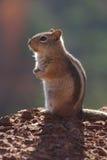 Uno scoiattolo Fotografia Stock Libera da Diritti