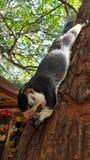 Uno scoiattolo enorme si siede su un albero fotografia stock