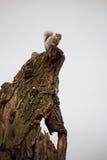 Uno scoiattolo solo si alimenta mentre guarda i turisti Fotografia Stock Libera da Diritti