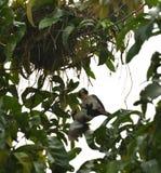 Uno sforzo morto di salvataggio e del pulcino dall'uccello della mamma fotografie stock libere da diritti