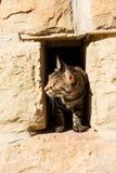 Uno sguardo del gatto Immagini Stock