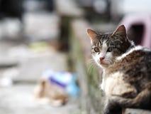 Uno sguardo del gatto indietro Immagini Stock