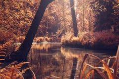 Uno stagno ad un parco Fotografia Stock Libera da Diritti
