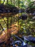Uno stagno calmo in profondità nella foresta Fotografia Stock