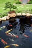 Uno stagno di pesci in giardino Immagine Stock Libera da Diritti
