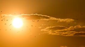 Uno stormo degli uccelli al tramonto Fotografie Stock