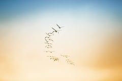 Uno stormo degli uccelli che volano nel cielo Fotografie Stock Libere da Diritti