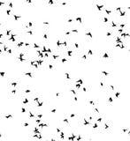 Uno stormo degli uccelli migratori Immagini Stock Libere da Diritti