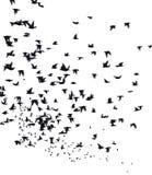 Uno stormo degli uccelli migratori Fotografie Stock Libere da Diritti