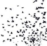 Uno stormo degli uccelli migratori Fotografia Stock