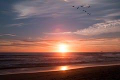 Uno stormo dei cormorani vola lungo il litorale in questo bello Fotografie Stock
