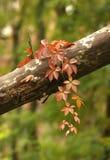 Uno strato di autunno è in un vecchio parco Fotografie Stock