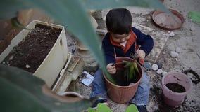Uno y medio años del bebé que juega con suciedad y que planta la planta del verde del áloe metrajes