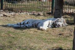 In uno zoo Fotografie Stock Libere da Diritti