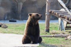 In uno zoo Immagini Stock
