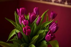 Unopened lilac tulip bud close-up. Russia, Moscow, holiday, gift, mood, nature, flower, plant, bouquet, macro. A lilac tulip bud. Macrophoto in table home royalty free stock photography