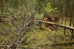 Unordentlicher Wald Lizenzfreies Stockfoto