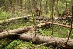 Unordentlicher Wald Stockbilder
