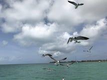 Unosić się seagulls Obrazy Royalty Free
