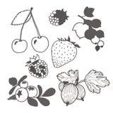 Unpainted ягоды Стоковое Изображение