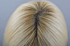 Unpainted regrown roots of blonde woman's head stock photography